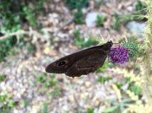 Schmetterlinge anderer Lizenzfreies Stockbild