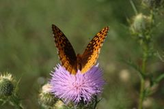 Schmetterlinge auf einem Gebiet Stockfoto