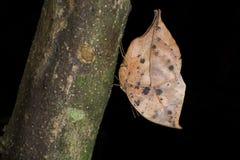 Schmetterlinge aus der ganzen Welt Stockfoto