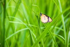 Schmetterlinge benutzt, um den Hintergrund zu machen Lizenzfreie Stockfotografie