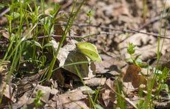 Schmetterlinge in der Natur lizenzfreies stockbild