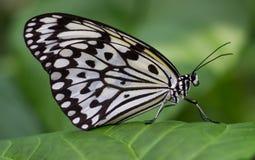 Schmetterlinge, die in einem Garten flattern und sich entspannen stockbild