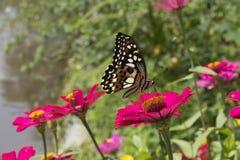 Schmetterlinge in einem schönen Blumengarten stockfotografie