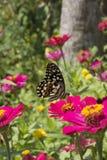 Schmetterlinge in einem schönen Blumengarten stockbild