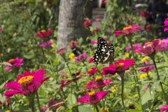 Schmetterlinge in einem schönen Blumengarten lizenzfreies stockfoto