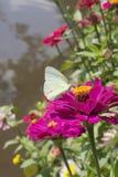 Schmetterlinge in einem schönen Blumengarten stockbilder