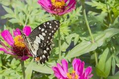 Schmetterlinge in einem schönen Blumengarten lizenzfreie stockfotos
