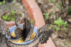 Schmetterlinge in einer ökologischen Oase Lizenzfreies Stockbild
