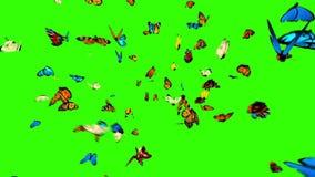 Schmetterlinge fliegen zur Kamera auf einem grünen Hintergrund stock video footage