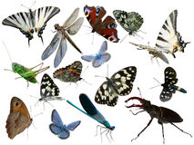 Schmetterlinge, Libelle, eine Heuschrecke, andere Insekten Stockbild