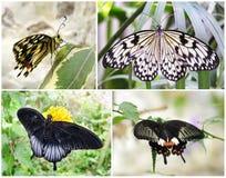 Schmetterlinge - Satz von 4 Fotoschüssen Stockfotos
