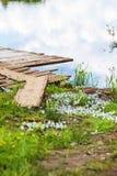 Schmetterlinge sind Kohlschmetterlinge auf der Bank des Flusses Mologa Stockbild