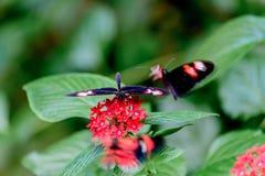 Schmetterlinge und Blumen Stockbilder