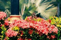 Schmetterlinge und Blumen Stockfotos