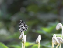 Schmetterlinge und Blumen Lizenzfreie Stockfotos