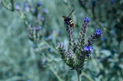 Schmetterlinge und Insekten sammeln süßen Nektar von den wilden Wildflowers Großer selektiver Fokus stockfoto