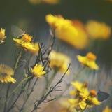 Schmetterlinge unter den wilden Gänseblümchen Lizenzfreie Stockfotos