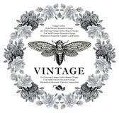 Schmetterlinge, Zikade, Insekten, barocke Rose blüht Weinleserahmenkarte Lizenzfreie Stockbilder