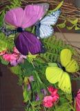 Schmetterlings-Anordnung stockbilder