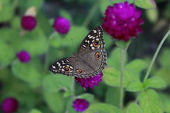 Schmetterlings-Blätter lizenzfreies stockfoto