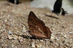 Schmetterlings-Blätter stockfotos