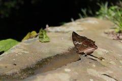 Schmetterlings-Blätter stockfoto