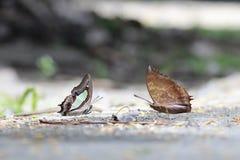 Schmetterlings-Blätter stockbild