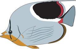 Schmetterlings-Fisch-Illustration des hohlrückigen Pferds lizenzfreie abbildung