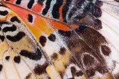 Schmetterlings-Flügel Stockfoto