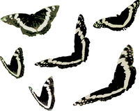 Schmetterlings-Insekten-Grafik-Clipart Lizenzfreies Stockbild
