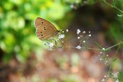 Schmetterlings-Makro stockfotos