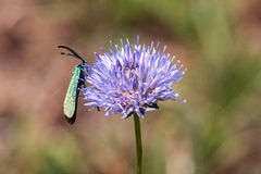 Schmetterlings-Makro Lizenzfreies Stockfoto
