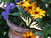 Schmetterlings-und Blumen-Topf Stockfoto