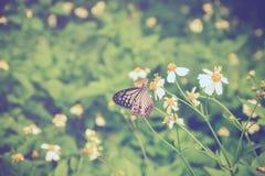 Schmetterlings- und Blumenfeld im Garten Lizenzfreies Stockfoto