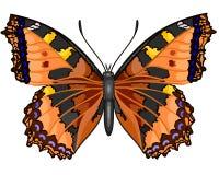 Schmetterlings-Vanessa-cardui Lizenzfreies Stockfoto