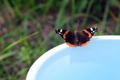 Schmetterlingsadmiral sitzt am Rand des Eimers Stockbilder