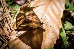 Schmetterlingsanschluß Lizenzfreies Stockfoto