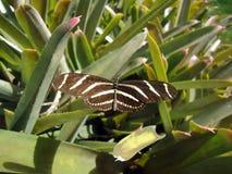 Schmetterlingsbildhintergrund Stockbild