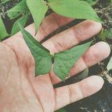 Schmetterlingsblatt stockfotografie
