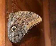 Schmetterlingseffekt Lizenzfreies Stockfoto