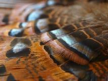 Schmetterlingsflügel Stockfoto