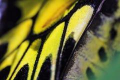 Schmetterlingsflügel Stockbilder