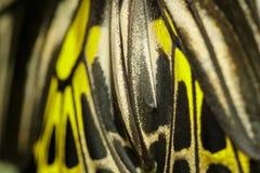 Schmetterlingsflügel Stockfotos