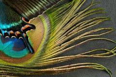 Schmetterlingsflügel und -feder Lizenzfreie Stockbilder