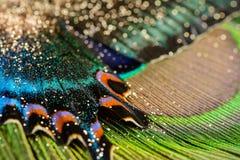 Schmetterlingsflügel und -feder Lizenzfreie Stockfotos