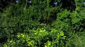 Schmetterlingsfliegen auf einigen Blumen auf dem Gebiet an einem sonnigen Tag stock footage