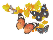 Schmetterlingsgraphik 1 Lizenzfreie Stockfotografie