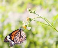 Schmetterlingsgriff auf Blume Lizenzfreie Stockbilder