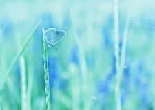 Schmetterlingskupferschmetterling auf dem Stiel- und Blumenmuster leichte Töne, Pastelle lizenzfreies stockbild