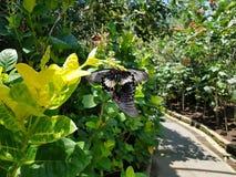 Schmetterlingsliebe stockbild